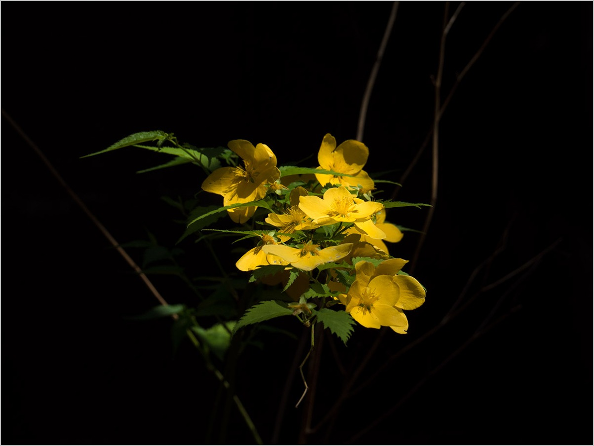庭の春に spring time #OLYMPUS OM-D E-M5II_c0065410_2275150.jpg