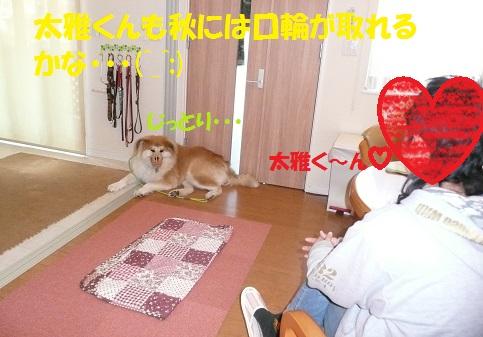 f0121712_8221763.jpg