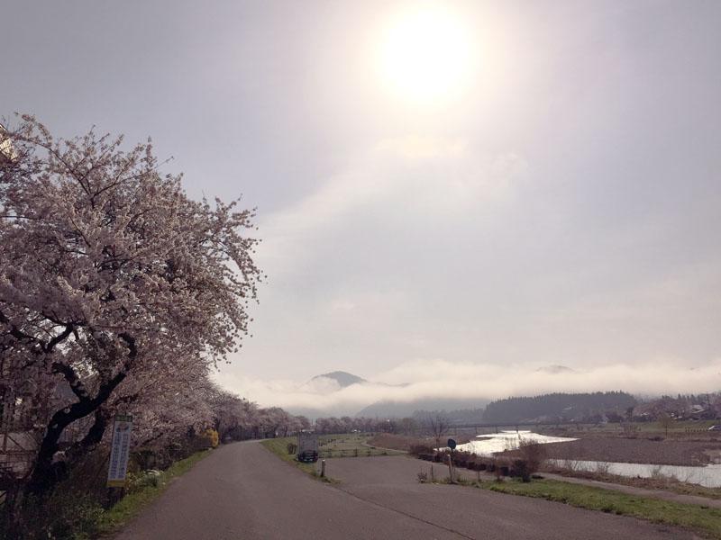 桜の花に包まれて_e0162117_1858252.jpg