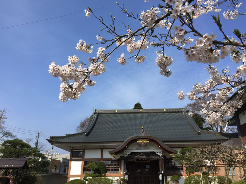 桜の花に包まれて_e0162117_18585131.jpg