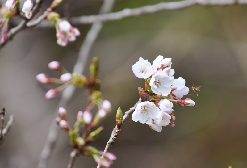 桜の花に包まれて_e0162117_1859355.jpg
