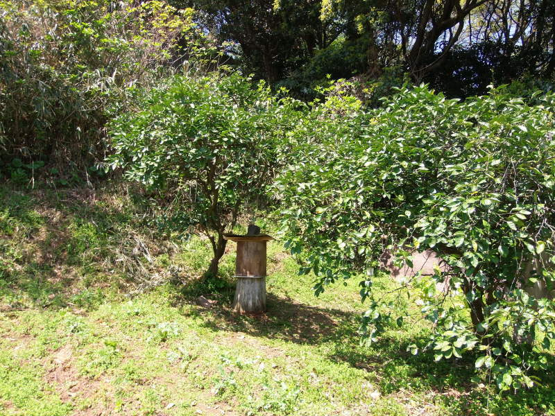 蜂の巣箱来ました。_a0125419_11353107.jpg