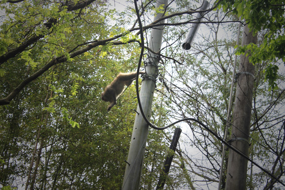 柞原神社の近くでお猿さんに遭遇♪_a0329820_08270186.jpg
