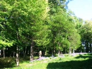 新緑が目立ち始めて、目に青葉山ほととぎす初鰹_f0291565_1322743.jpg
