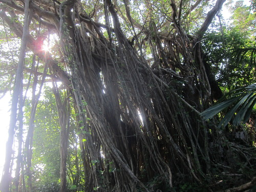 Ending-Northern Okinawa._c0153966_16521844.jpg