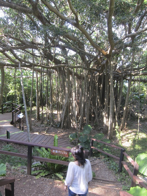 Ending-Northern Okinawa._c0153966_1655015.jpg