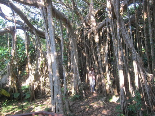 Ending-Northern Okinawa._c0153966_16562387.jpg
