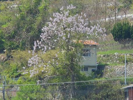 藤色の季節が来た_e0175370_12254159.jpg