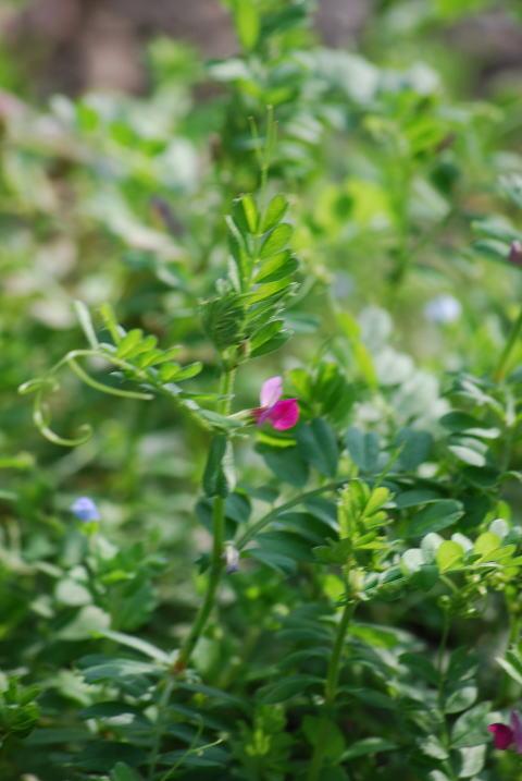 小さな可愛い草花。。_b0189573_1804691.jpg