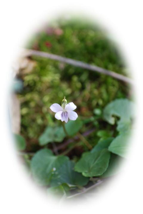 小さな可愛い草花。。_b0189573_1835558.jpg