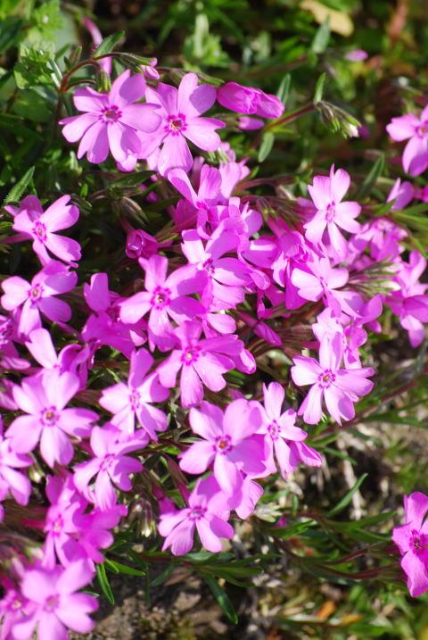 小さな可愛い草花。。_b0189573_193061.jpg