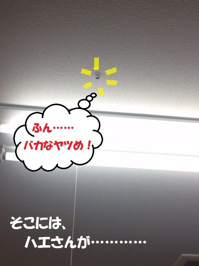 c0226073_18135680.jpg