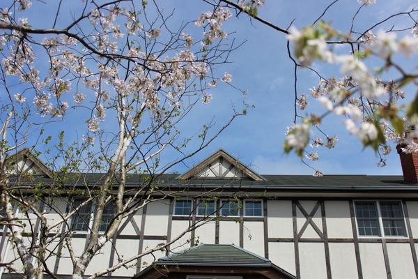 草原の風の桜_e0262382_11493182.jpg