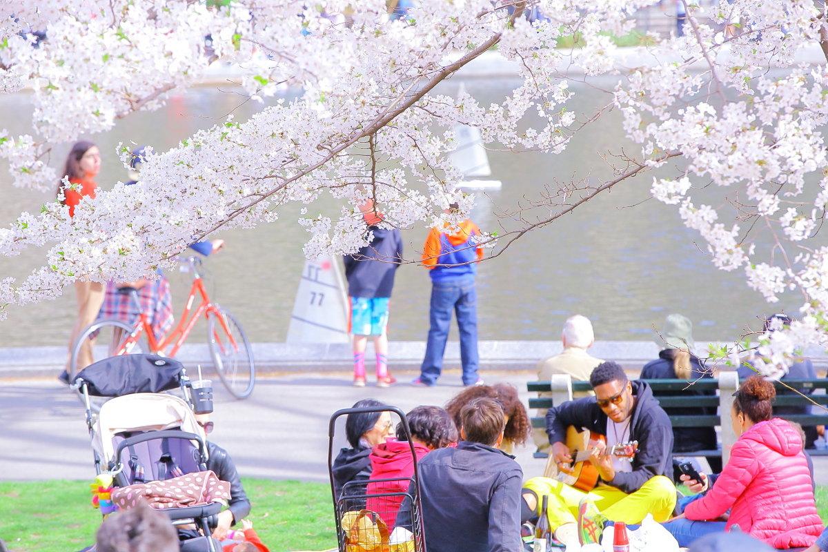 君は何桜?_a0274805_06113952.jpg