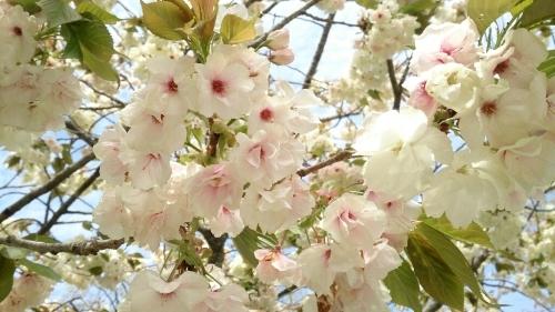 花がまだまだ咲き誇るお庭_f0211506_21003244.jpg