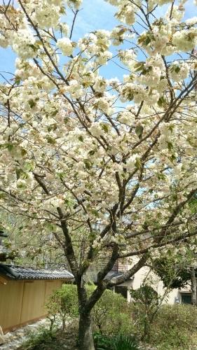 花がまだまだ咲き誇るお庭_f0211506_21003292.jpg