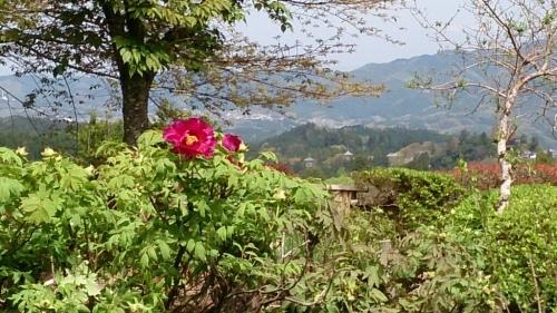花がまだまだ咲き誇るお庭_f0211506_21003346.jpg