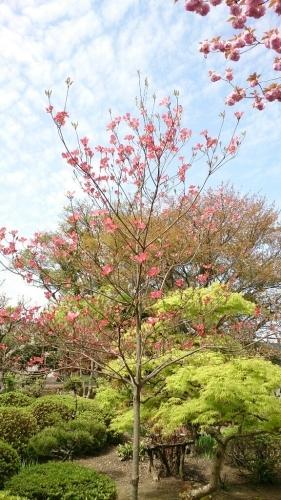 花がまだまだ咲き誇るお庭_f0211506_21003373.jpg
