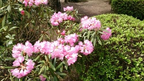 花がまだまだ咲き誇るお庭_f0211506_21003387.jpg