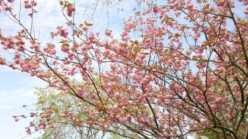 花がまだまだ咲き誇るお庭_f0211506_21003418.jpg