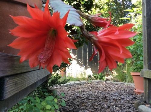 花は咲く_a0331910_10132352.jpg