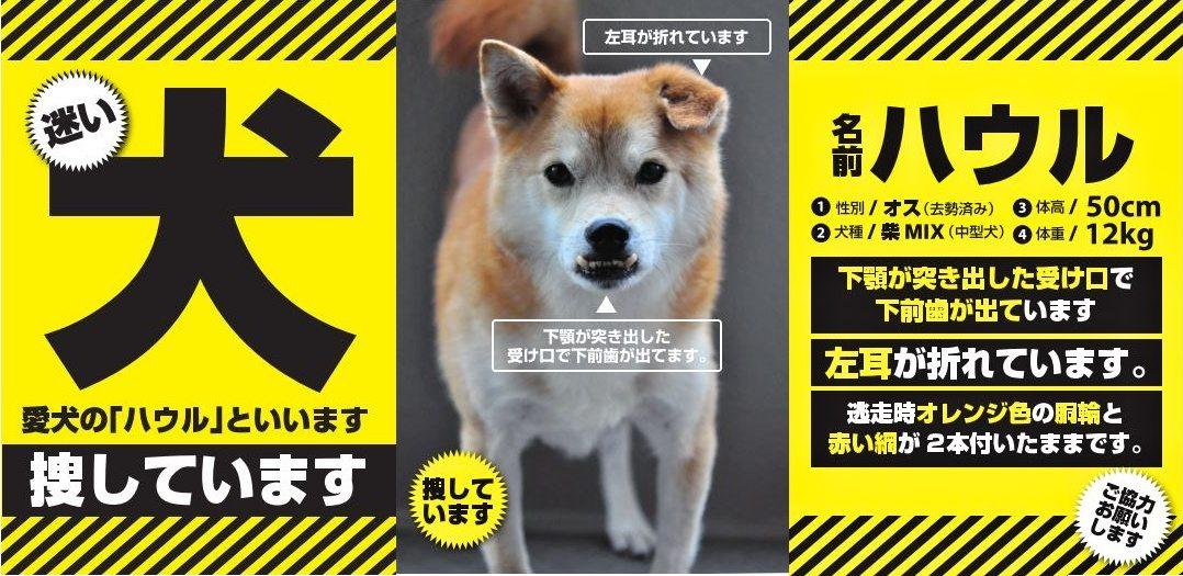 戸塚の犬を探してます。_e0005411_19385061.jpg
