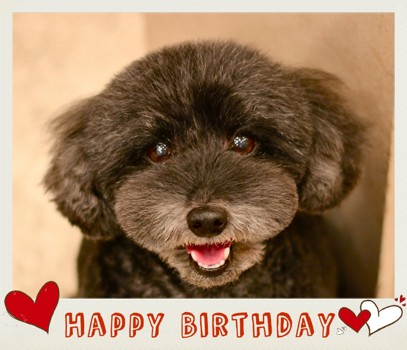 Happy Birthday♡プポちゃん_d0060413_16213243.jpg