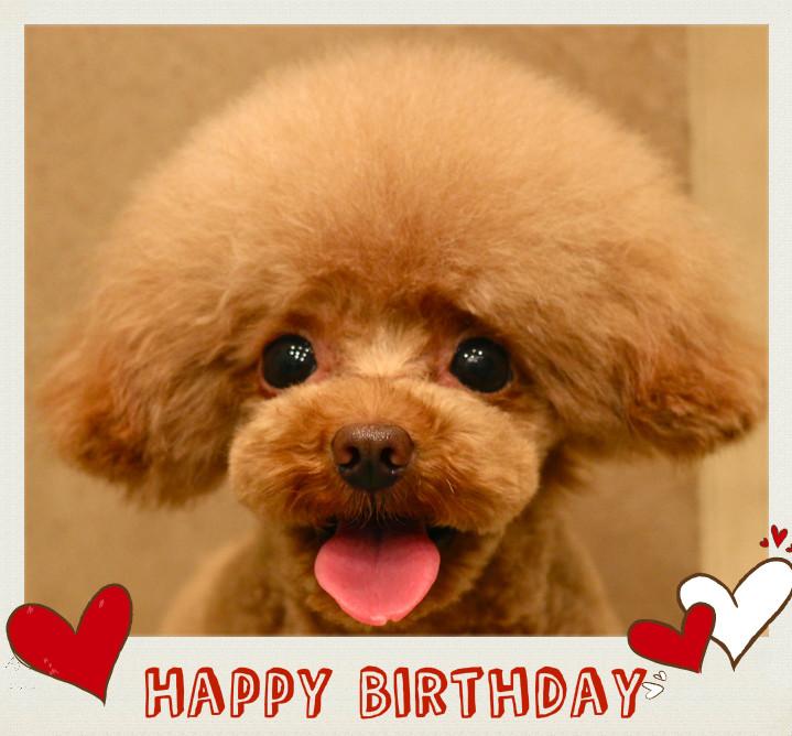Happy Birthday♡キャンセルくん_d0060413_1624345.jpg