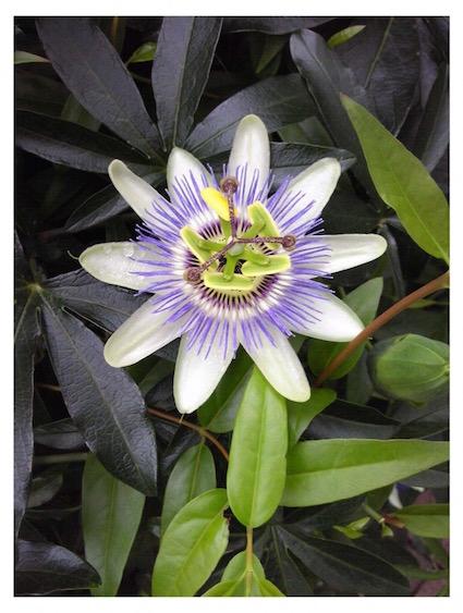 4.25(sat) botanical SHOP始まります!_a0169017_1658113.jpg