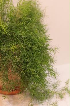 4.25(sat) botanical SHOP始まります!_a0169017_1734211.jpg
