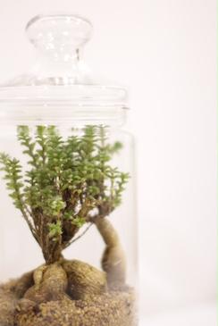4.25(sat) botanical SHOP始まります!_a0169017_1735776.jpg