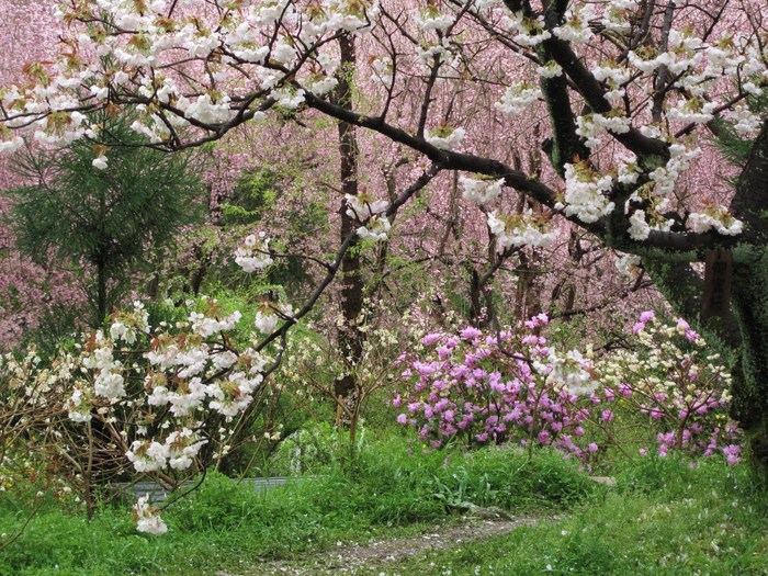 吉野山 千本桜 & 京の遅咲き 桜旅 (2)_d0150720_9304862.jpg