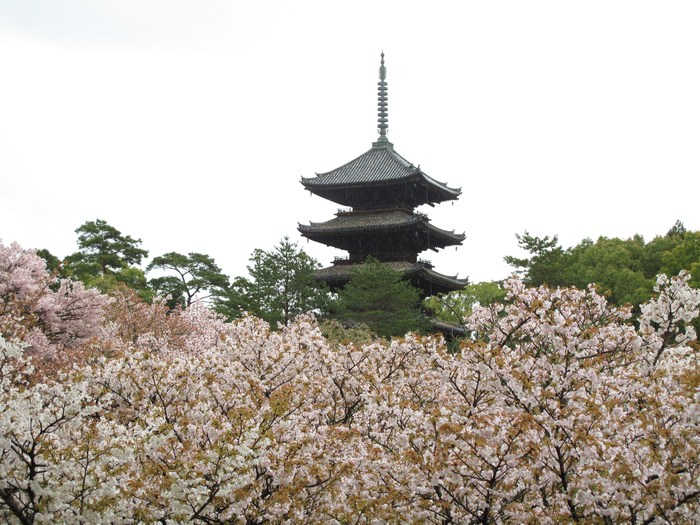 吉野山 千本桜 & 京の遅咲き 桜旅 (2)_d0150720_9513986.jpg