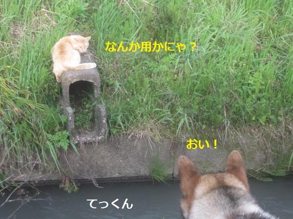 f0143123_20141670.jpg