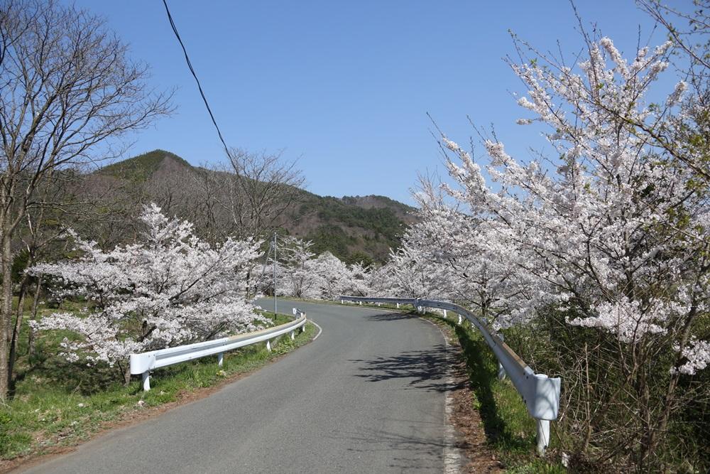 桜花_c0111229_19231255.jpg