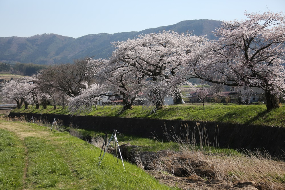 桜花_c0111229_19232942.jpg