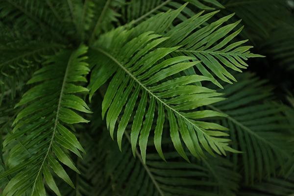 植物_a0097735_23404063.jpg