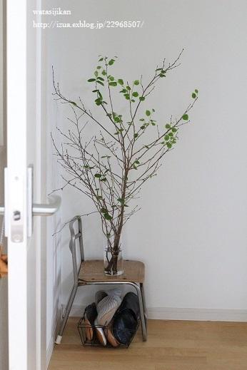 水栽培用ポットと葉をつける_e0214646_22221736.jpg