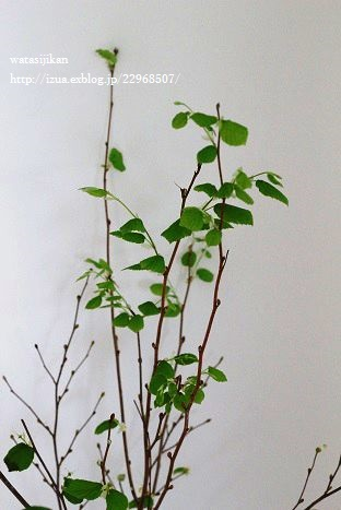 水栽培用ポットと葉をつける_e0214646_22243865.jpg