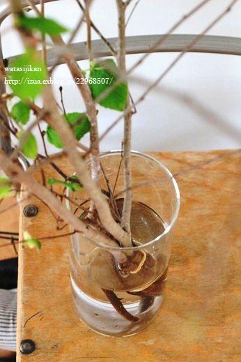 水栽培用ポットと葉をつける_e0214646_2225983.jpg