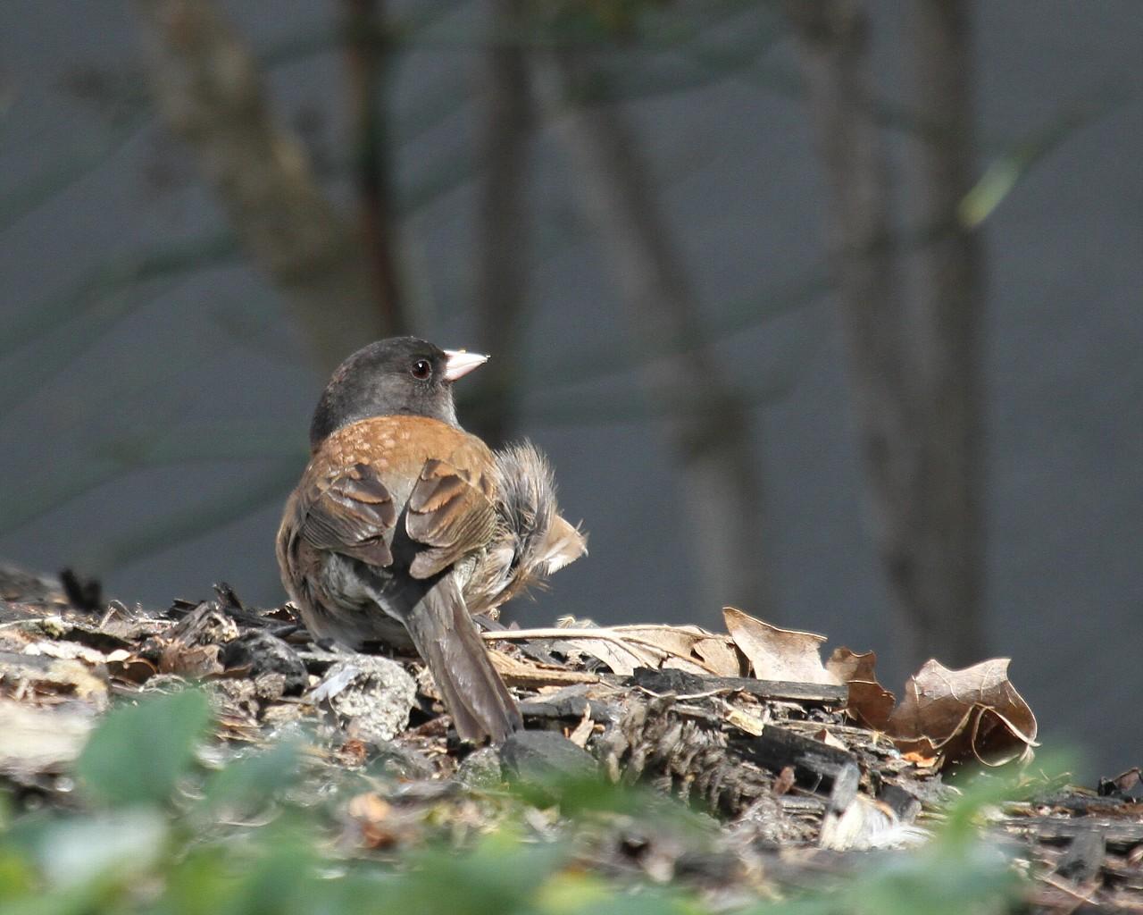 カリフォルニアで出逢った野鳥その5_f0105570_21413720.jpg