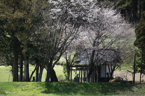 桜シーズン到来_f0075075_18192037.jpg