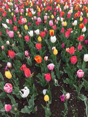 春色バスケット_f0305884_1261852.jpg
