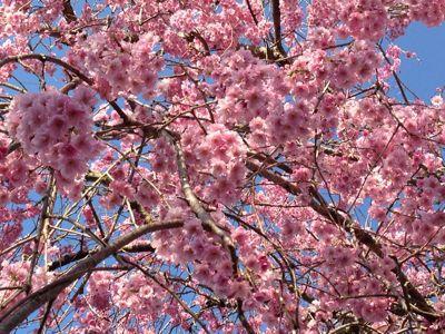 隣のお庭は花盛り_d0027486_723175.jpg