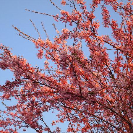桜が咲いた_a0292194_22242479.jpg