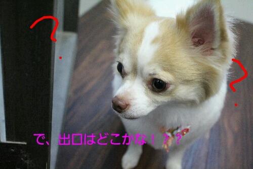 b0130018_136680.jpg