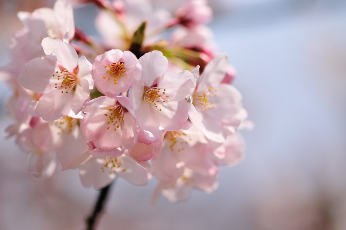 種松山公園_f0224648_161154100.jpg