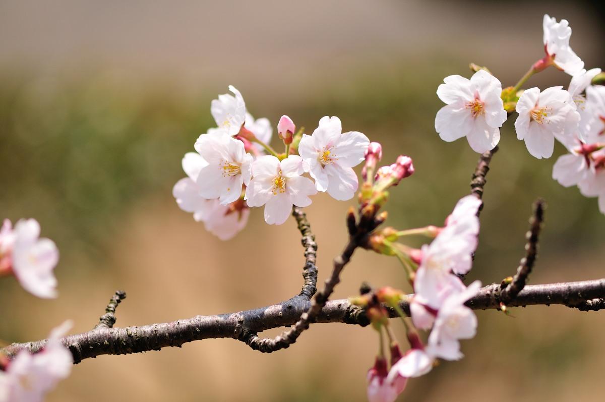 種松山公園_f0224648_16121276.jpg