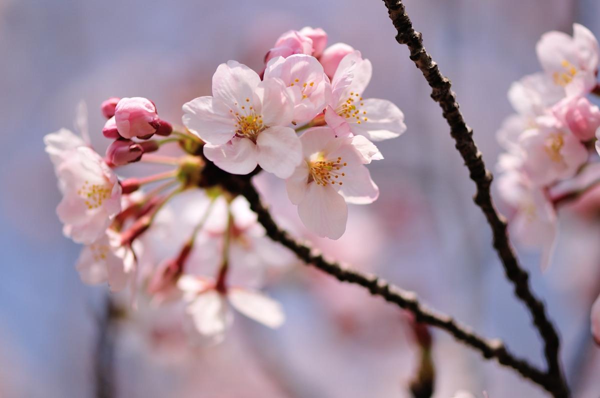 種松山公園_f0224648_16123071.jpg