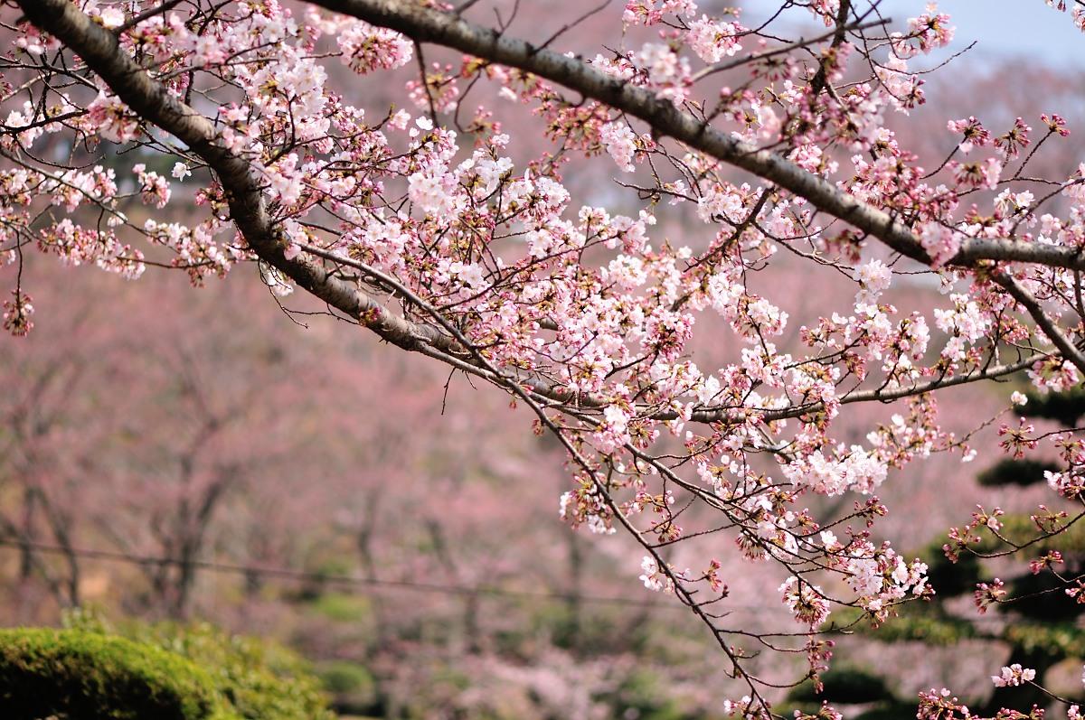 種松山公園_f0224648_16124440.jpg